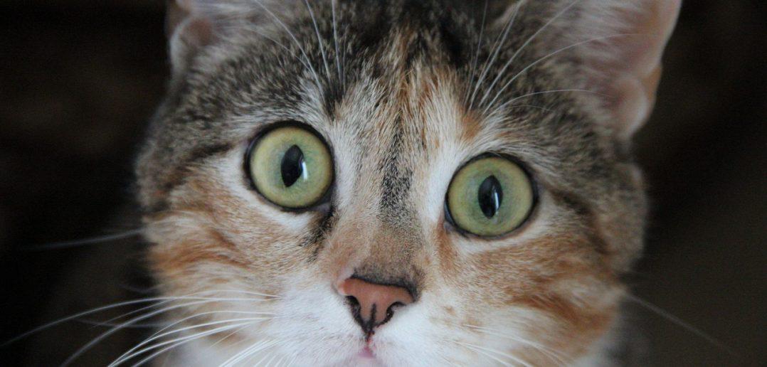Umzug Katze Bachblüten