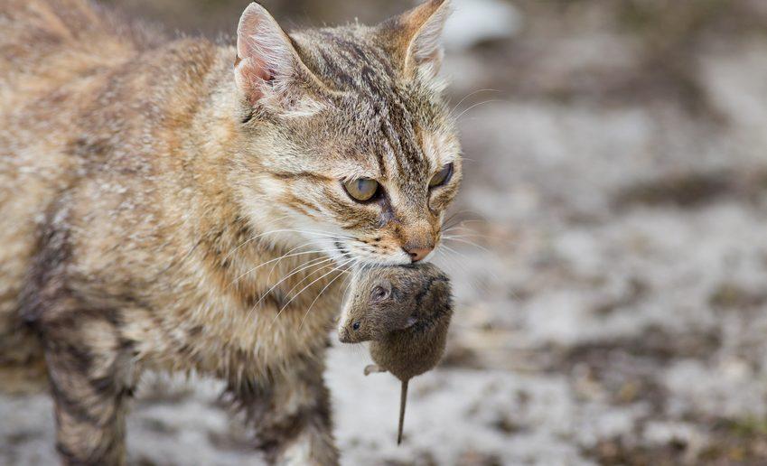 BARFen statt Fertigfutter - Katzen artgerecht ernähren