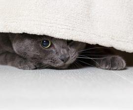 Katze ängstlich