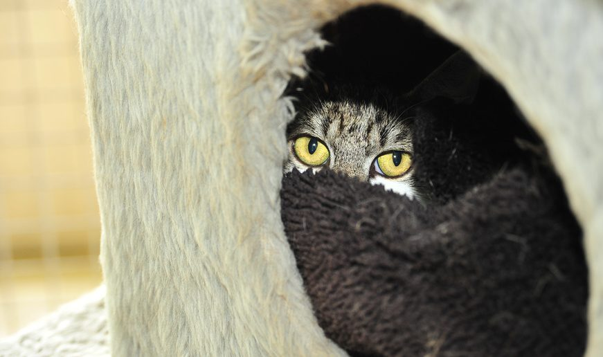 Katze scheu Versteck