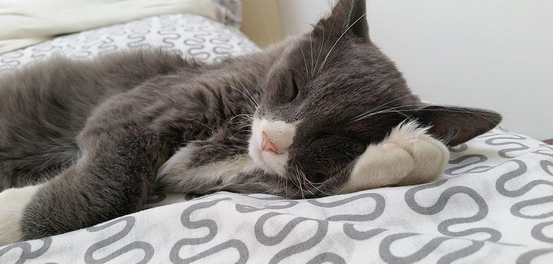 Katze Impfungen Nebenwirkungen
