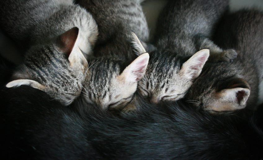 Kitten wachsen mit Milch von ihrer Mutter auf