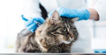 Katzenimpfung