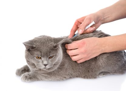Dieabetes bei Katzen