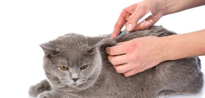 Diabetes bei Katzen