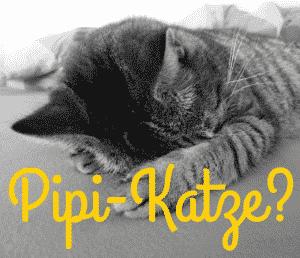 10 Tipps gegen Unsauberkeit bei der Katze