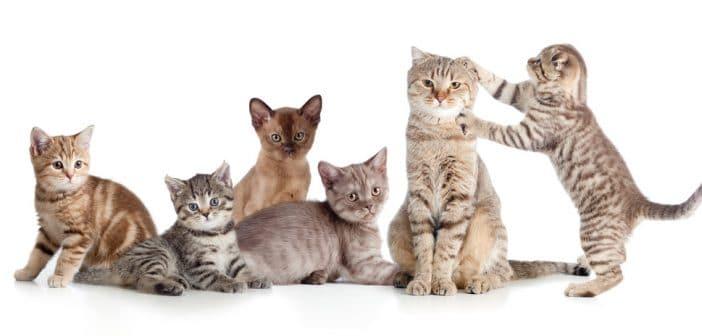 Liste der Katzenrassen