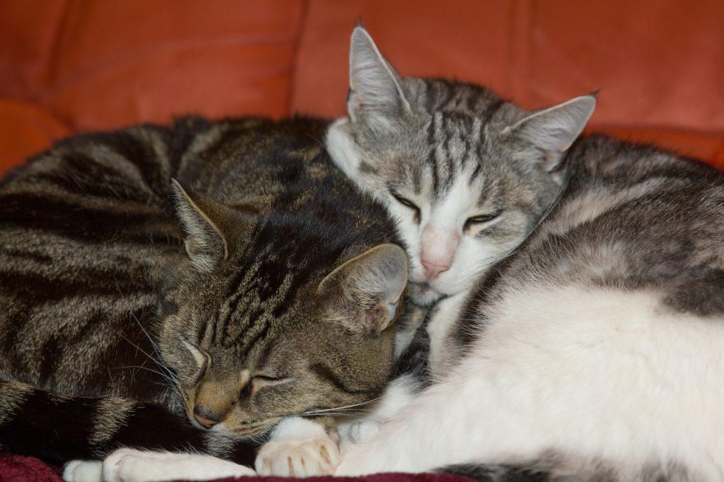 Zweite Katze Ruhe in der Nacht