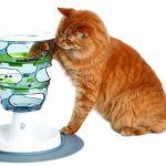 Futterlybyrinth für Katzen