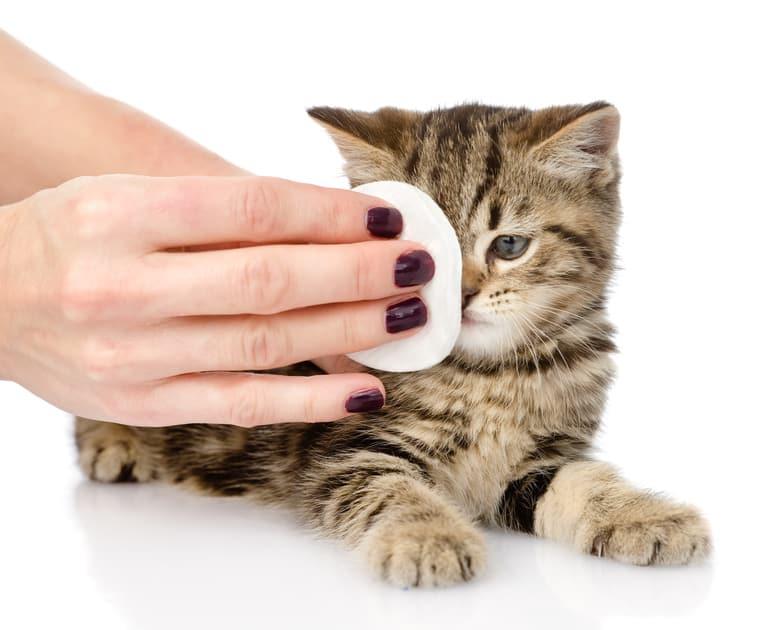 Katze tränende Augen behandeln