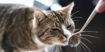 Schonkost für Katzen