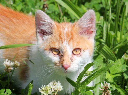 Tränende Augen Katze