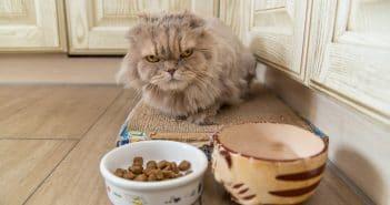 Katze frisst nicht - Appetitlosigkeit