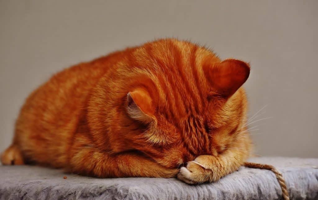 Schonkost Katzen