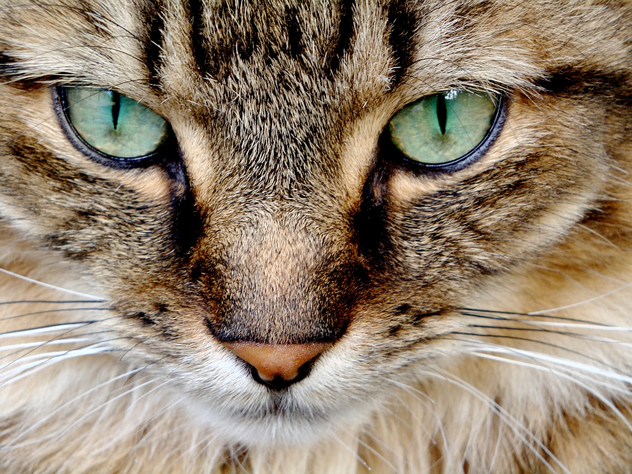 Cats Eyes Close Up