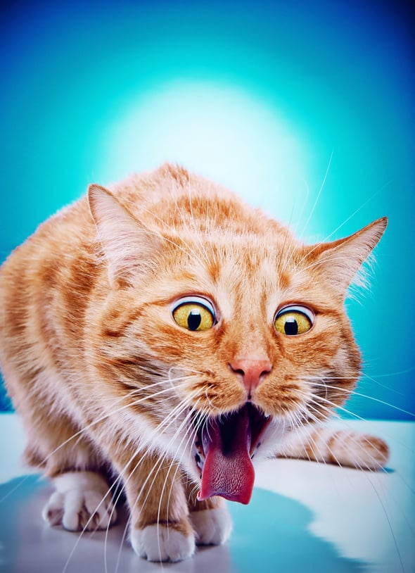 Bild / Foto: Katze Erbrechen, Kotzen, Übergeben
