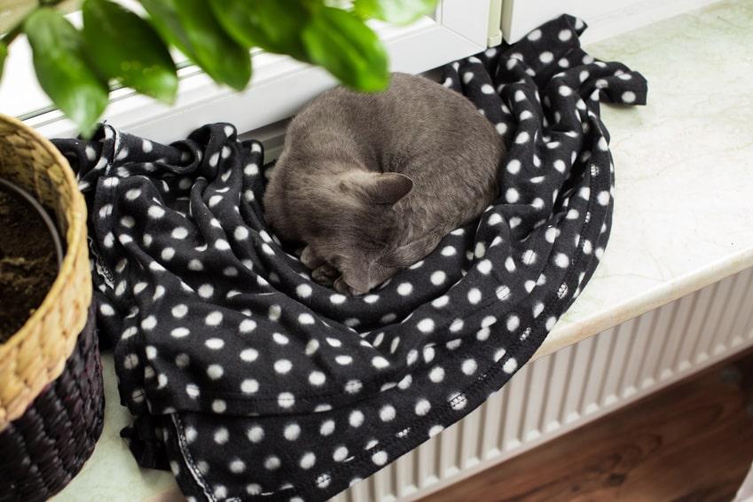 Bild / Foto: Rollige Katze schläft auf der Heizung. Die Wärme wirkt beruhigend