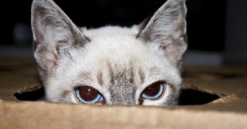Bild/Foto: Wurmkur bei Katzen