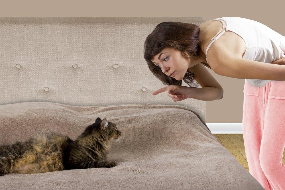 Bild / Foto: Die 10 schlimmsten Fehler bei der Katzenerziehung