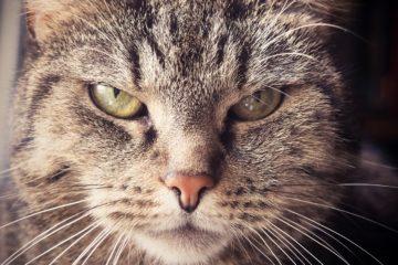 Bild / Foto: Fehler in der Katzenerziehung