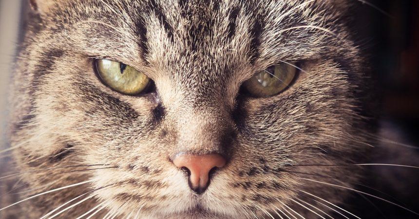 Bil / Foto: Fehler in der Katzenerziehung