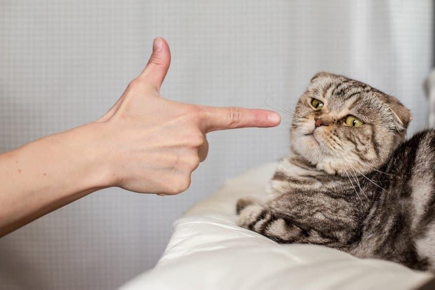 Bild / Foto: Katzen Erziehung Fehler