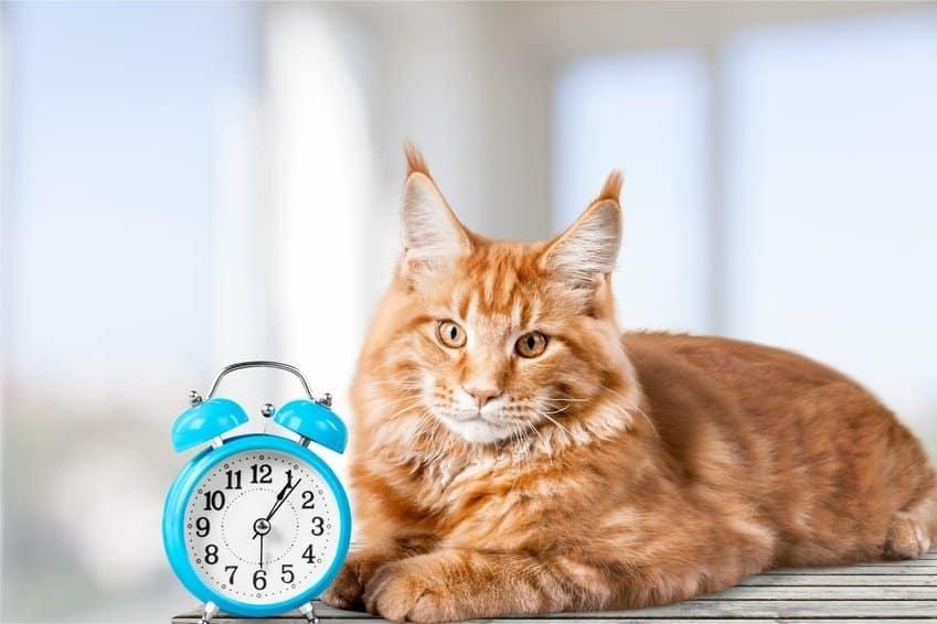 Bild / Foto: Timing bei der Erziehung von Katzen
