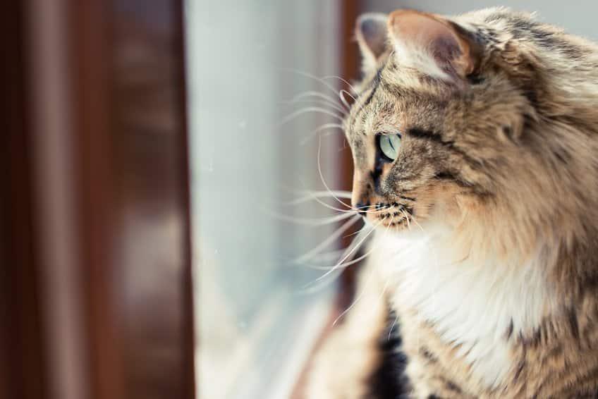 Bild / Foto: Katze sitzt am Fenster und will raus