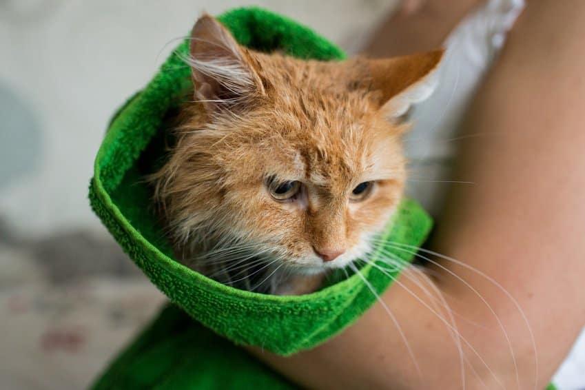 Bild / Foto: Katze Abkühlung im Sommer Handtuch, Hitze
