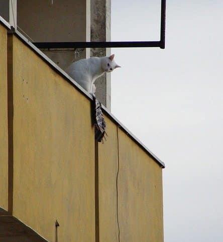 Bild / Foto: Katze auf dem Balkon