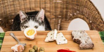 Katze Menschenessen - Was dürfen Katzen nicht fressen?