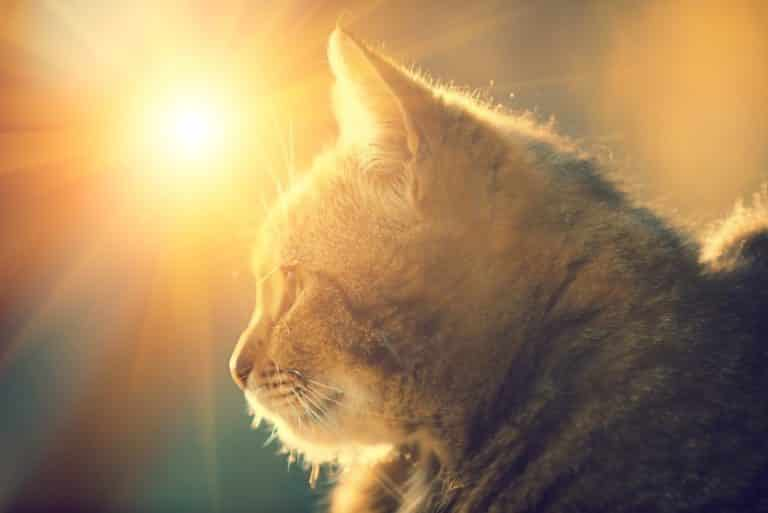 Bild / Foto: Katze Sommer Hitze