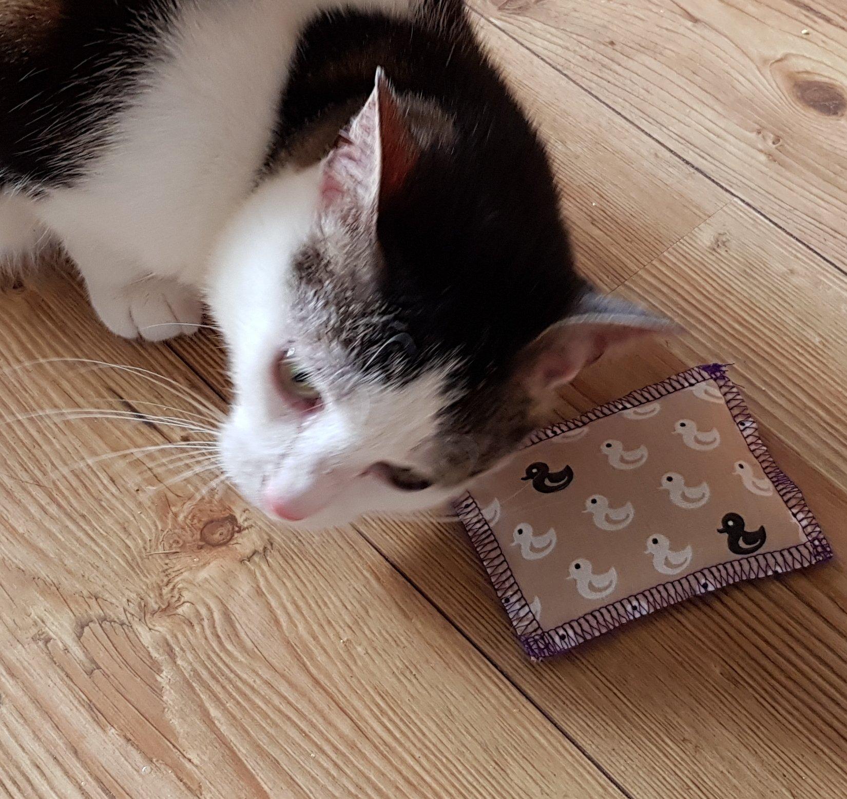 Bild / Foto: Baldriankissen für Katzen