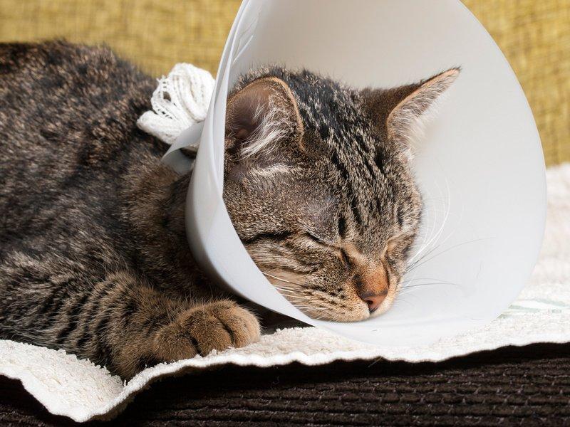 Bild /Foto: Katze Nachsorge nach Operation