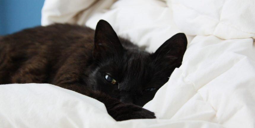 katzenkram dein katzenblog katzenfreunde hereinspaziert. Black Bedroom Furniture Sets. Home Design Ideas