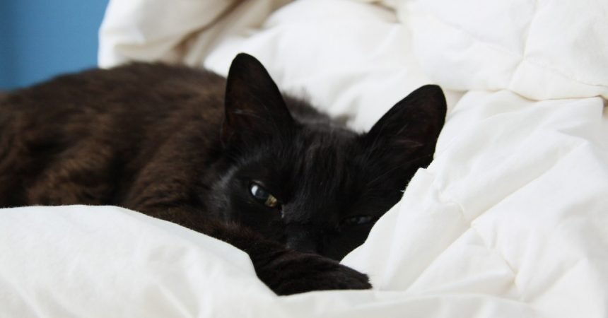 Bild / Foto: Katze nach Operation