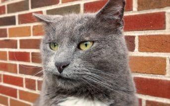 Bild /Foto: Verstopfung Katze