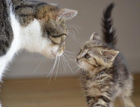 Bild / Foto: Wann sind Katzen ausgewachsen