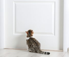 deine katze kratzt an sofa oder tapete so gew hnst du ihr. Black Bedroom Furniture Sets. Home Design Ideas