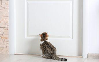 Bild / Foto: Katze kratzt an der Tür abgewöhnen