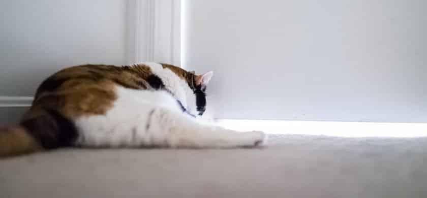 Bild / Foto: Katze kratzt an der Tür