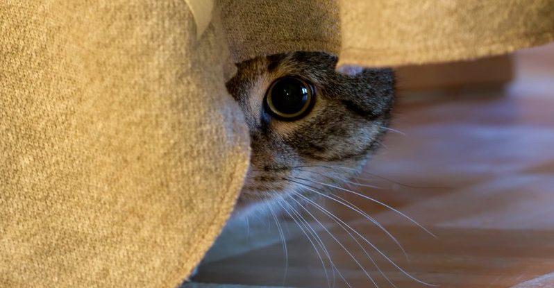 Bild / Foto: Katze Unsauberkeit psychische Probleme