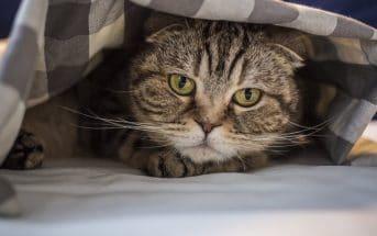 Bild / Foto: Katze pinkelt ins Bett