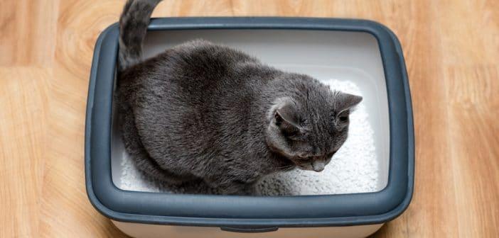 Katze Blasenentzündung