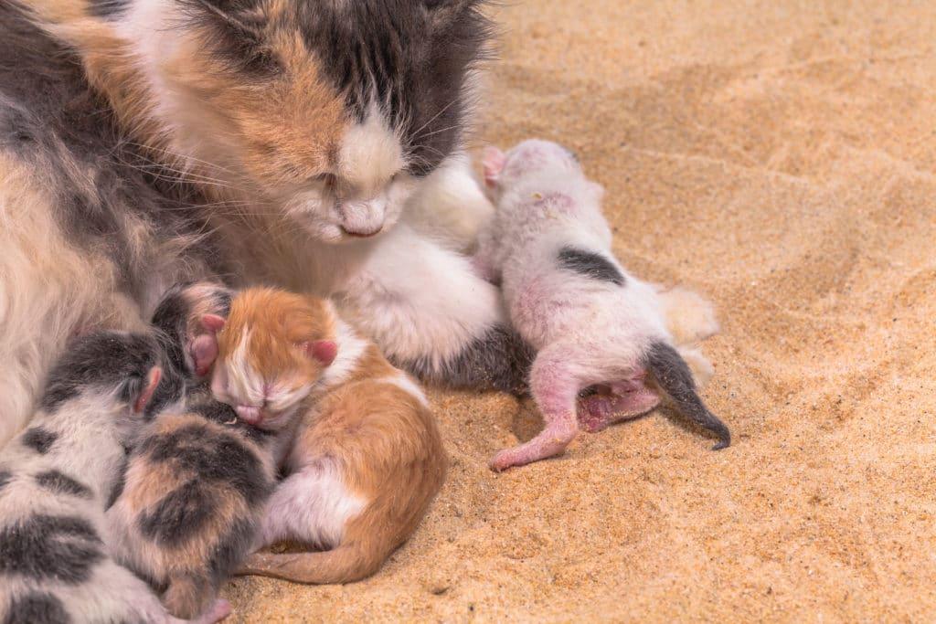Katze Geburt