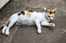 Trächtigkeit Katze