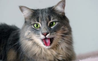 Katze hechelt