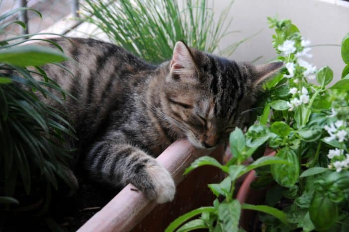 Balkon Katze sichern