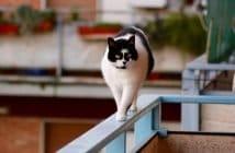 Balkon katzensicher machen