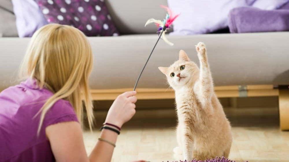 Bewegung hilft gegen Übergewicht bei Katzen